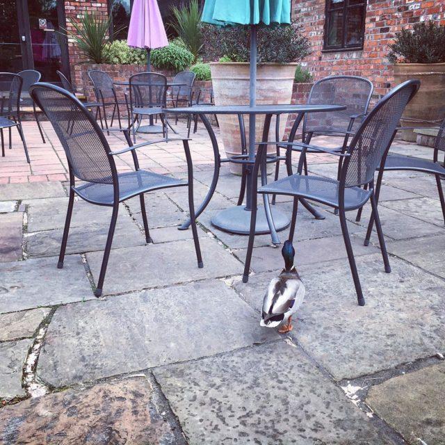Writing and loving the birds wandering around the restaurant hellip